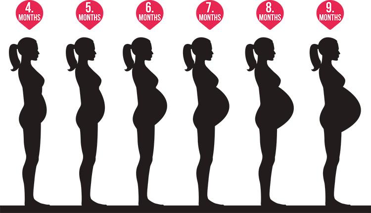 妊婦の体の変化