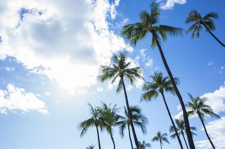 ハワイ ヤシの木と青空