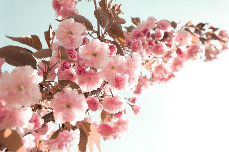 桜がテーマの結婚式