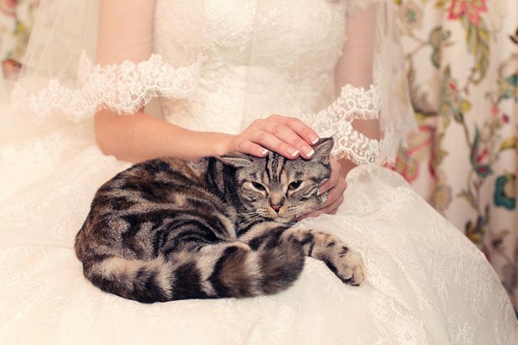 猫と一緒のフォトウエディング
