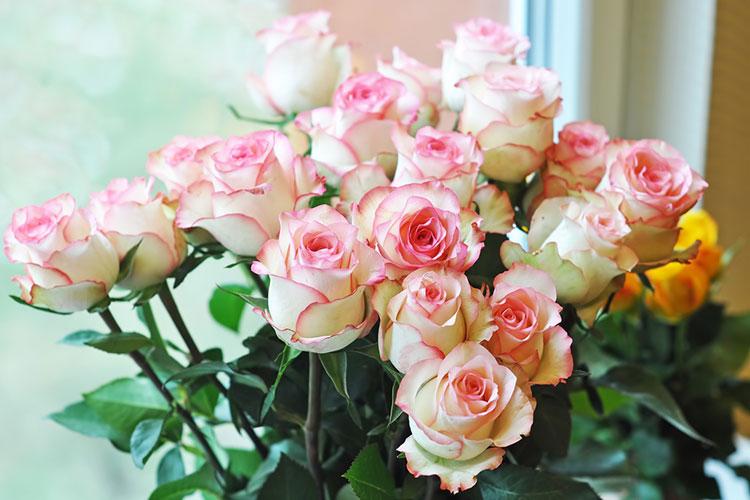 ダーズンローズのバラの色は何でもOK