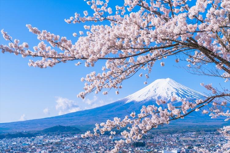 結婚 本籍 日本国内なら可  富士山でもOK