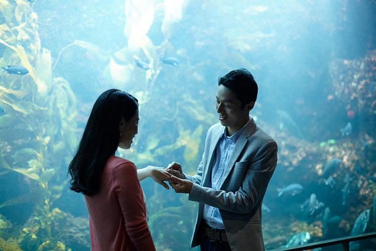 カップルと水族館