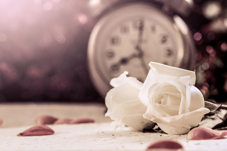 白いバラと時計