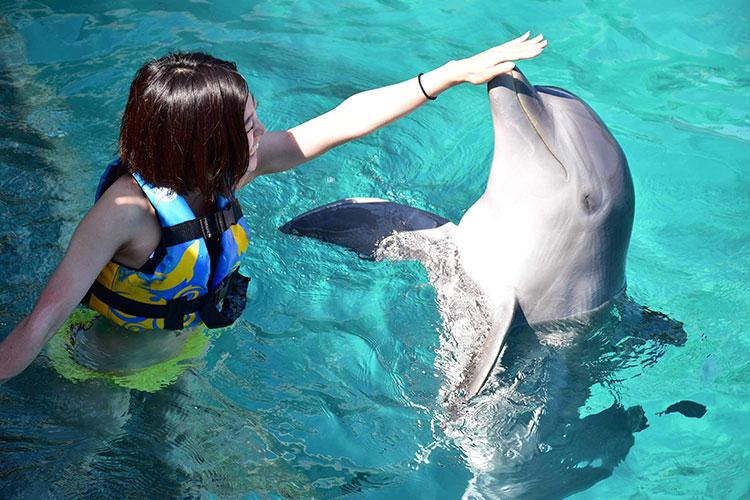 ジンベイザメだけじゃなく、イルカとも泳げる